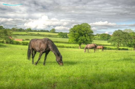 HDR horses coventry